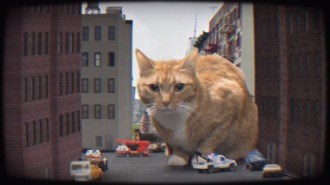 meow the jewels oh my darling just blaze remix video