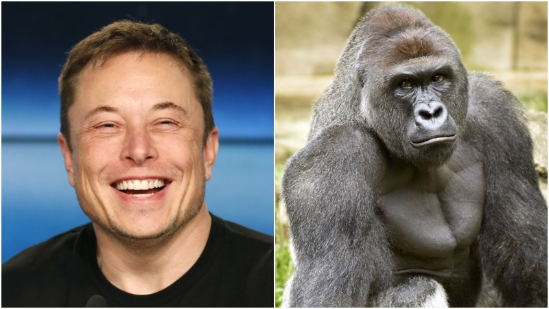 Elon Musk drops rap song eulogizing Harambe the gorilla